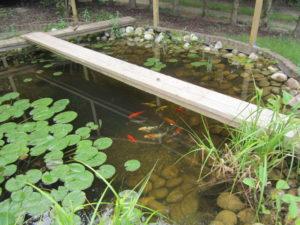 Innenleben vom Teich 1