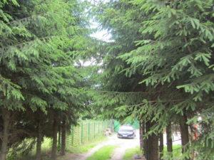 Zufahrtsweg zum Gelände (2)